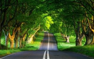 绿树成荫xp主题