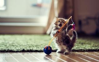小猫才艺展示win7主题