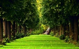 绿色树林草地唯美风景图片壁纸