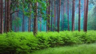 唯美森森意境风景壁纸